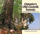 Ontario Old-Growth Forest