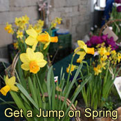 Get A Jump On Spring