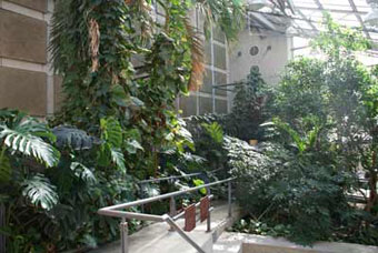 The Cloud Forest Conservatory