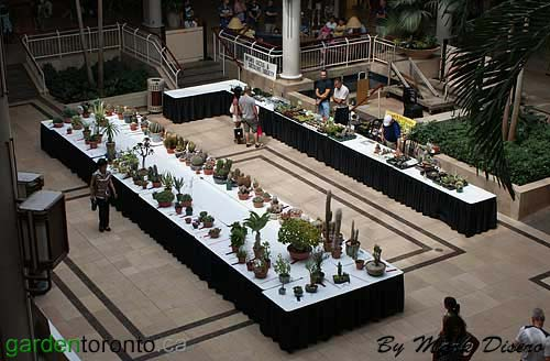 Ontario Cactus and Succulent Society Show