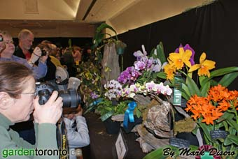 The Southern Ontario Orchid Society 2011 Show at the Toronto Botanical Garden